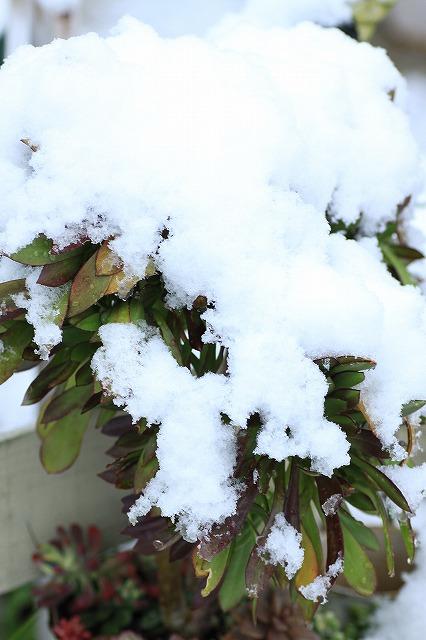 IMG_6103雪景色