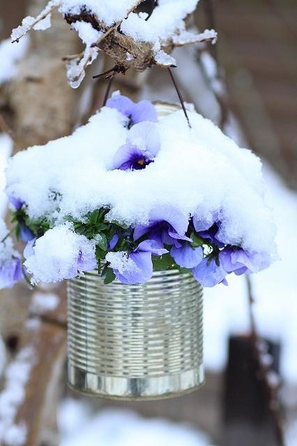 IMG_6107雪景色