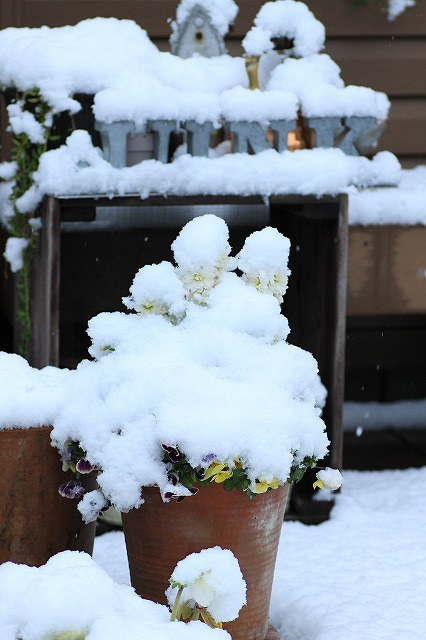 IMG_6110雪景色
