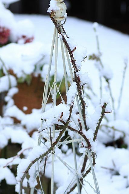 IMG_6112雪景色