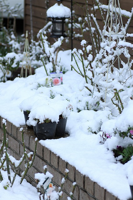 IMG_6115雪景色
