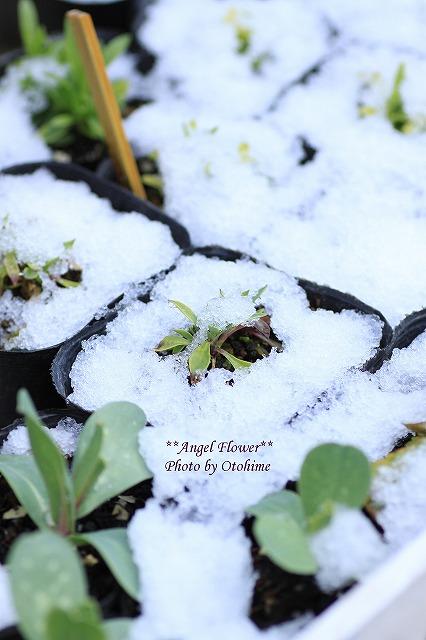 IMG_6121雪景色