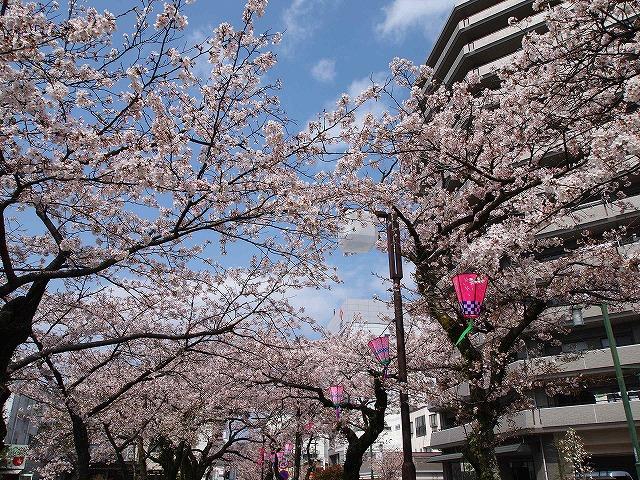 057小田原城お堀端