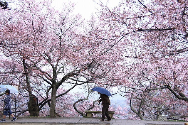 IMG_9063桜をくぐる^^