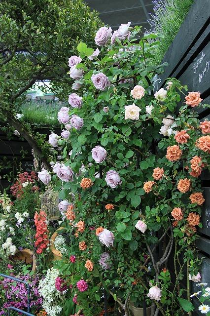 IMG_4050国際バラとガーデニングショー