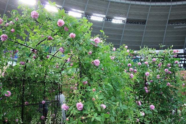 IMG_4060国際バラとガーデニングショー