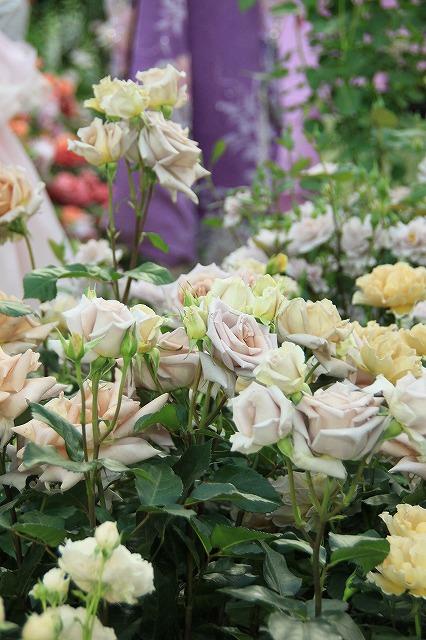 IMG_4096国際バラとガーデニングショー