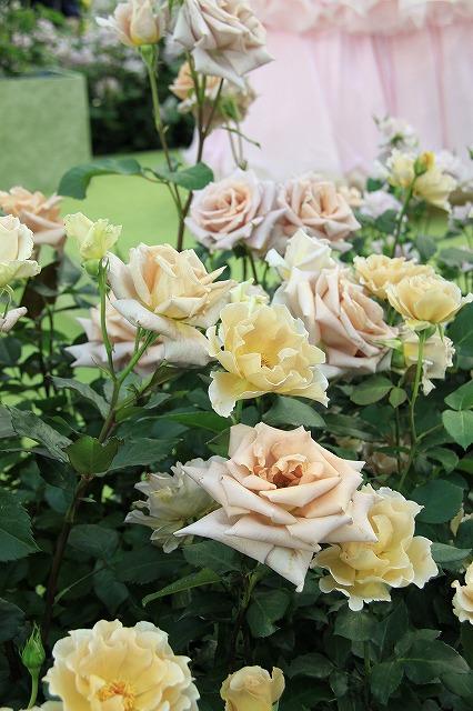 IMG_4105国際バラとガーデニングショー