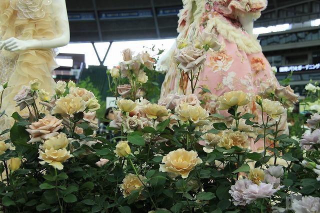 IMG_4122国際バラとガーデニングショー