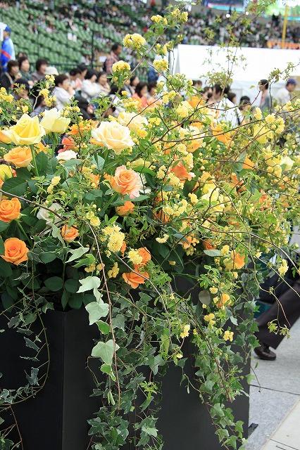 IMG_4327国際バラとガーデニングショー