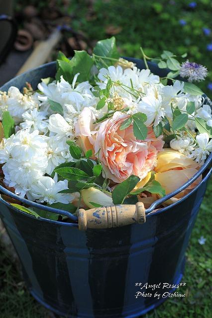 IMG_6371花がら切り