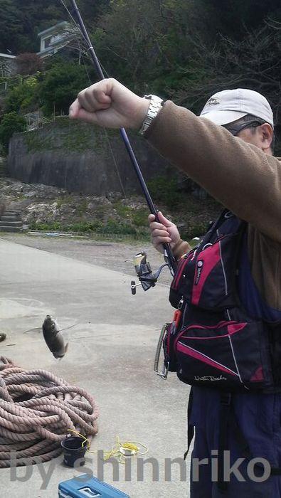 猫の夫がやっとアジを釣り上げました。