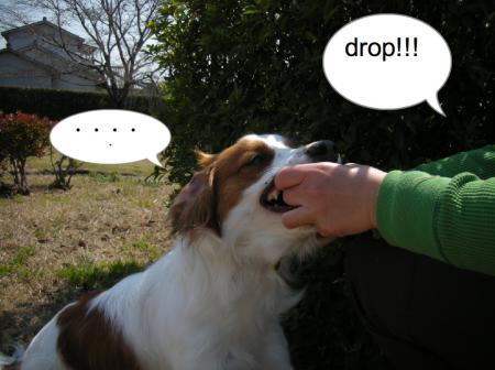 drop_convert_20110327214710.jpg