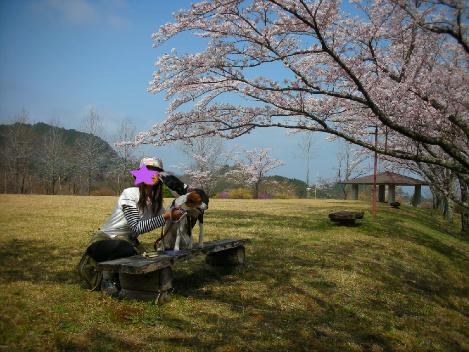 sakura3_20110409170602.jpg
