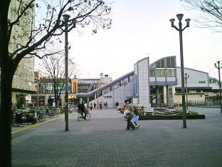 海軍道路の桜2-010