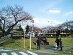 日米親善桜祭りチーズバーガー①002