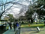 日米親善桜祭りチーズバーガー①012