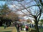 日米親善桜祭りチーズバーガー①013