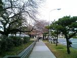 日米親善桜祭りホットドック②001