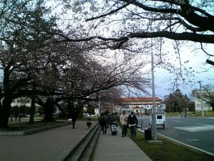 日米親善桜祭りハンバーガー③019