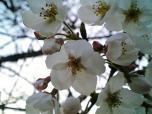日米親善桜祭りハンバーガー③020