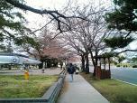 日米親善桜祭りハンバーガー③021