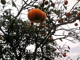 にしんの昆布巻きとかぼちゃ006