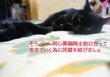 02_20090611230530.jpg