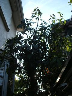 011_convert_20090516091220.jpg