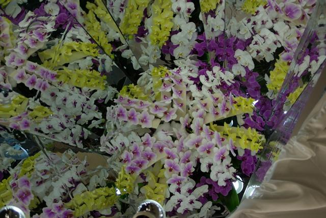 胡蝶蘭の万華鏡