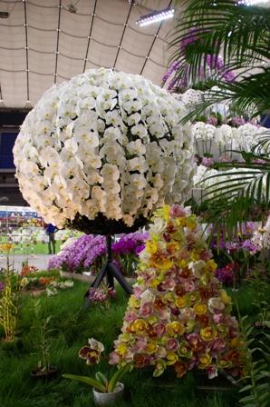 胡蝶蘭の花ボール