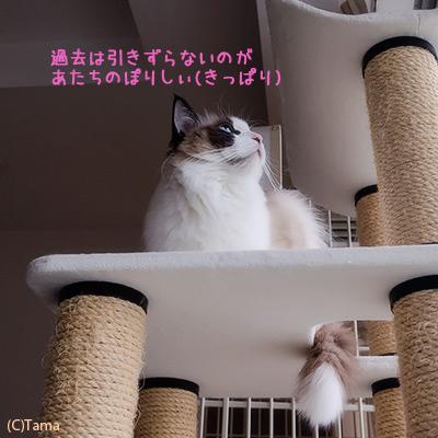 20120411_1.jpg