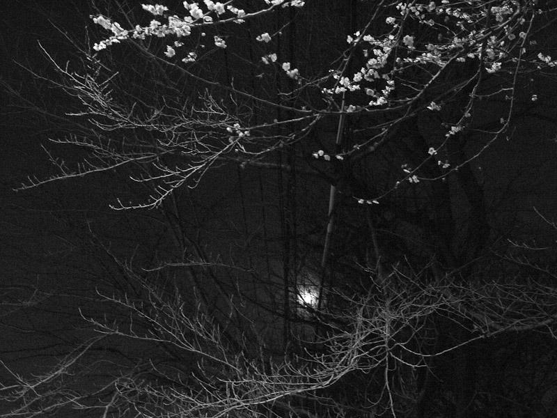 1_plum-tree_and_iron.jpg