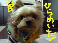 2009_1223_075657-P1040717.jpg