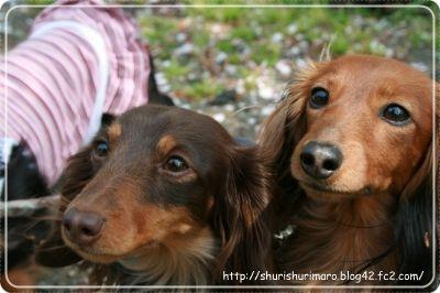 フィーユとシュリ