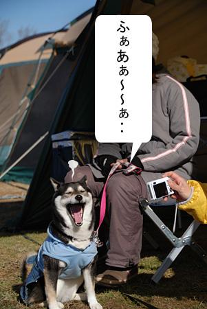 さくらちゃんのあくび~