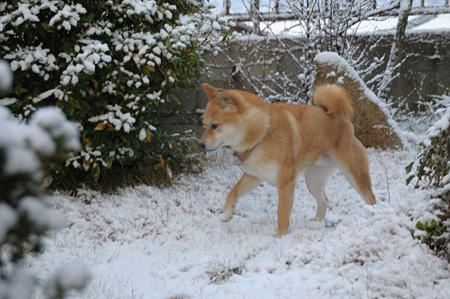 雪が降って嬉しいのではなくて