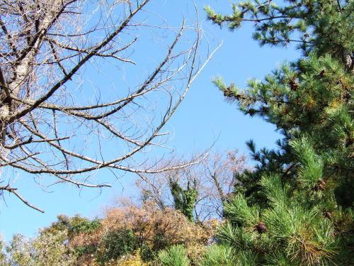 様々な木々