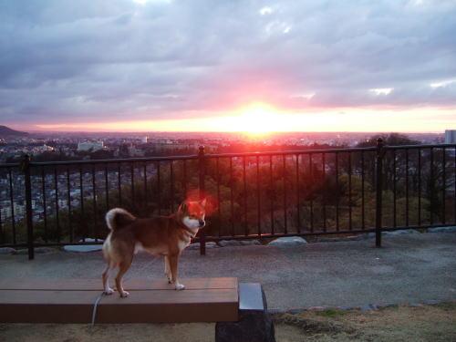夕日の冠♪