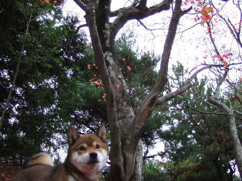 もう葉っぱが落ちちゃいました