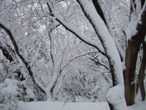 お山の雪模様