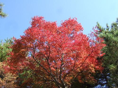 秋が深まりました