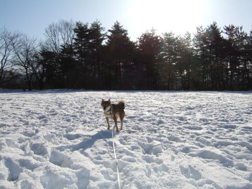 雪に降り注ぐお日様