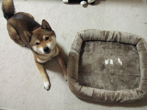 悲しげなベッド