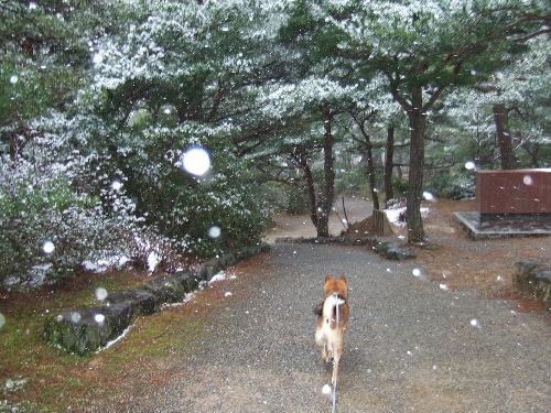 雪が降ってるね~