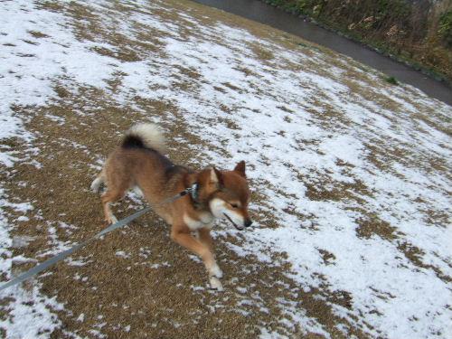 雪、大好き!
