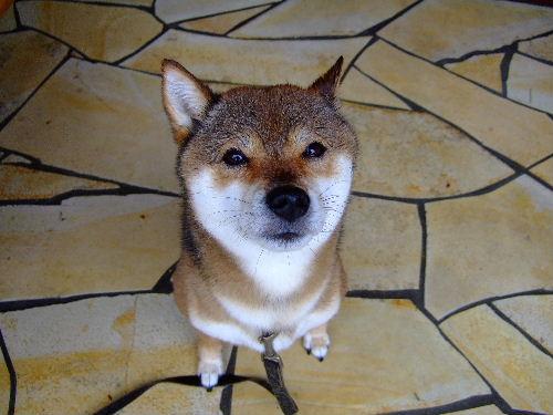 迷い犬のような風情?