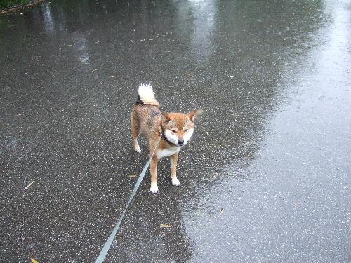 雨、すごい・・・