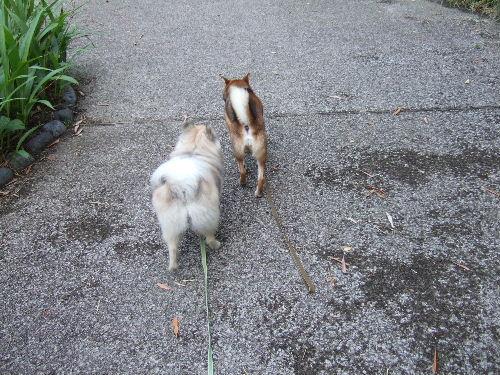 一緒に歩こう~