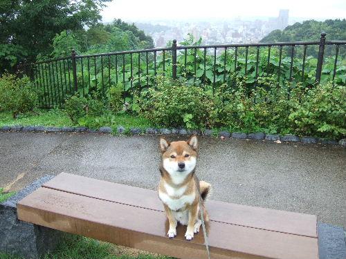 いいかげんウンザリな雨模様